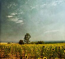 sunflower landscape by paulgrand