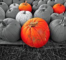 Pumpkin Color by Wendy Mogul