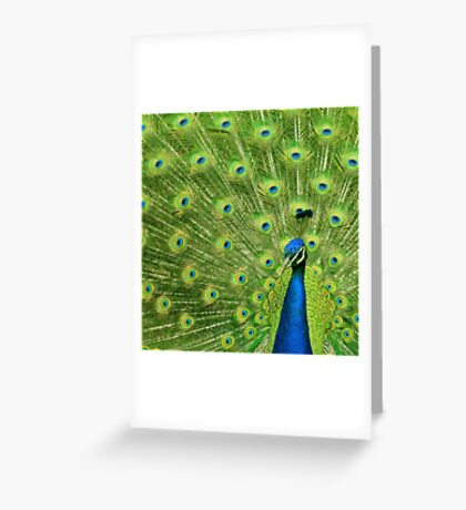 Peacock - Yes I am following you for a reason Greeting Card