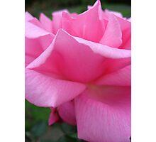 Soft Petal Pink Photographic Print