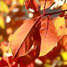 Autumn Color by Stephen  Van Tuyl