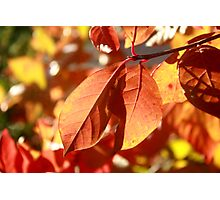 Autumn Color Photographic Print