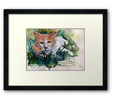 Community Cat Framed Print