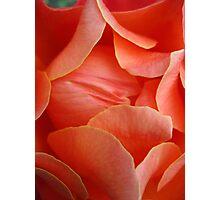 Rose Petal Abstract no.3 Photographic Print