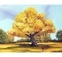 Old Cottonwood ~ Southwest Landscape ~ Oil Painting Photographic Print
