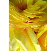 Rose Petal Abstract no.4 Photographic Print