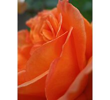 Rose Petal Abstract Photographic Print