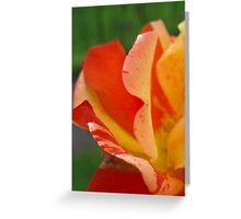 Petal Abstract Greeting Card