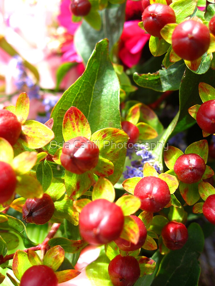 Berries by Orla Cahill Photography