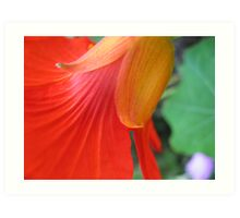 Nasturtium Abstract Art Print
