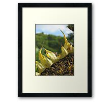 Withering Sun Framed Print