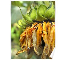 Withered Sunflower no.2 Poster