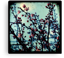 Spring Blossoms Through The Viewfinder - TTV Canvas Print
