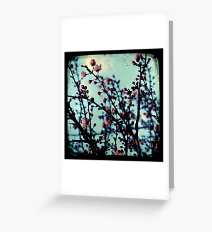 Spring Blossoms Through The Viewfinder - TTV Greeting Card