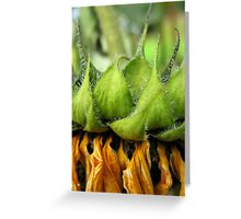 Withered Sunflower no.7 Greeting Card