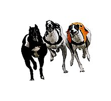 GREYHOUND RACING Photographic Print