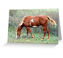 Grazing in Wild flowers Greeting Card
