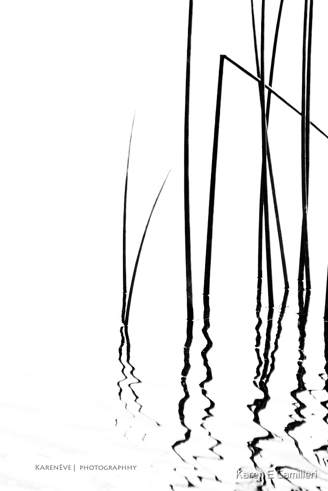 Reeds II by Karen E Camilleri