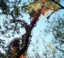 La lumière d'autumne 4 by xplor-r