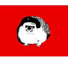 Che Erizo!(Hedgehog!) Photographic Print