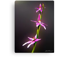 Pink Fairy Orchid Canvas Print