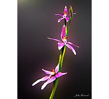 Pink Fairy Orchid Photographic Print