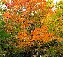 Orange Octoberfest by MarianBendeth