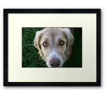 Dog Face Framed Print