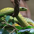 Snake by Will Talley