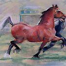 Welsh cob by jj1953
