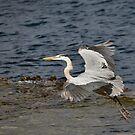 Landing by citrineblue