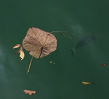 Leaves and Fishes-6285 by Barbara Harris