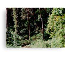 The Bush -  a Photomatix HDR experiment. Canvas Print
