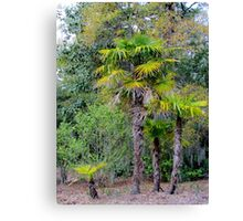 Family of Palm Trees Canvas Print