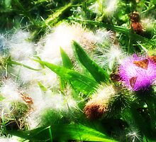 thistle butterfly 2 by xplor-r