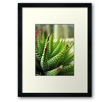 Cactus Abstract Framed Print