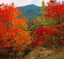 AUTUMN MAPLES by Chuck Wickham