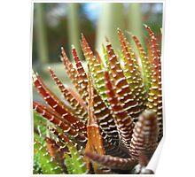 Cactus Abstract no.2 Poster