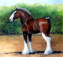 Clydesdale Horse Portrait by Oldetimemercan