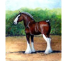 Clydesdale Horse Portrait Photographic Print
