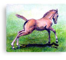 Dun Quarter Horse Foal Portrait Canvas Print