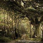 Forest by Fernando Rosenberg