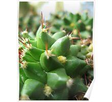 Cactus Abstract no.3 Poster