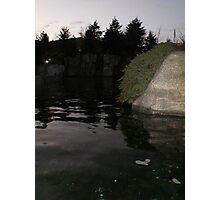 Beluga pool Photographic Print