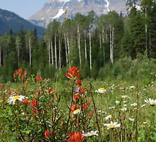 Wildflower Meadow at Mt. Robson by Roxanne Persson