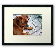 Puppy, Ubud, Bali Framed Print
