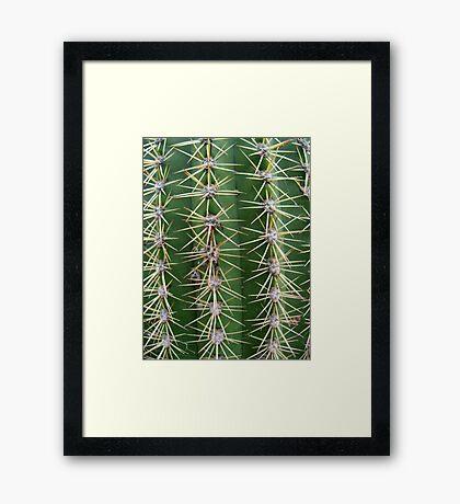 Prickly Cactus no.2 Framed Print
