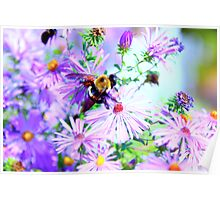 Bumble Bee Beautiful Flower Poster
