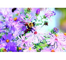 Bumble Bee Beautiful Flower Photographic Print