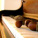 Ivories And Acorns by EmSoFi